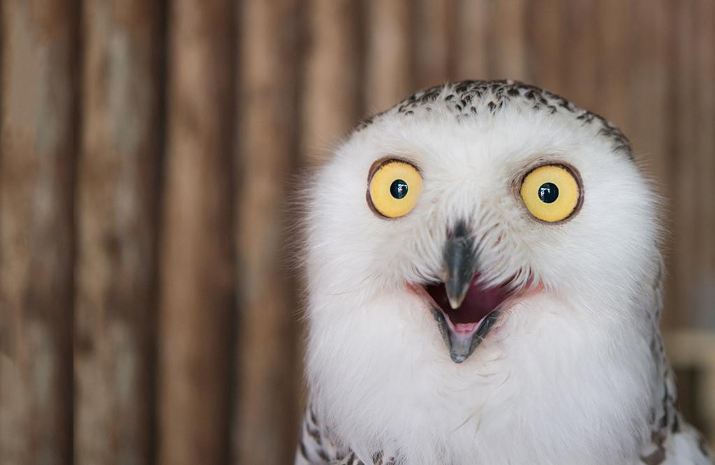 owl1 1024x666