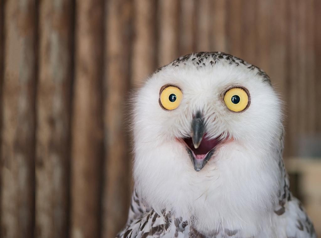 owl1 1024x758 mobile