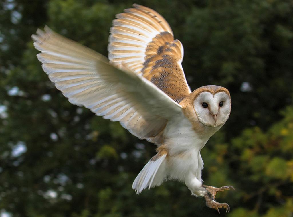 owl2 1024x758