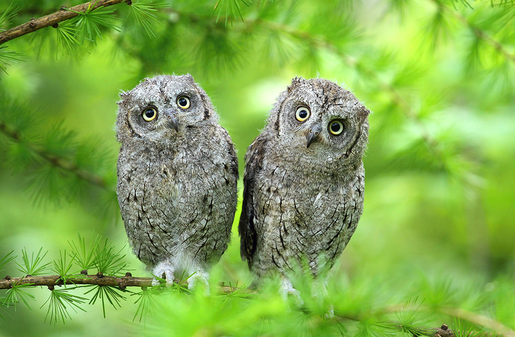 owl3 1024x672