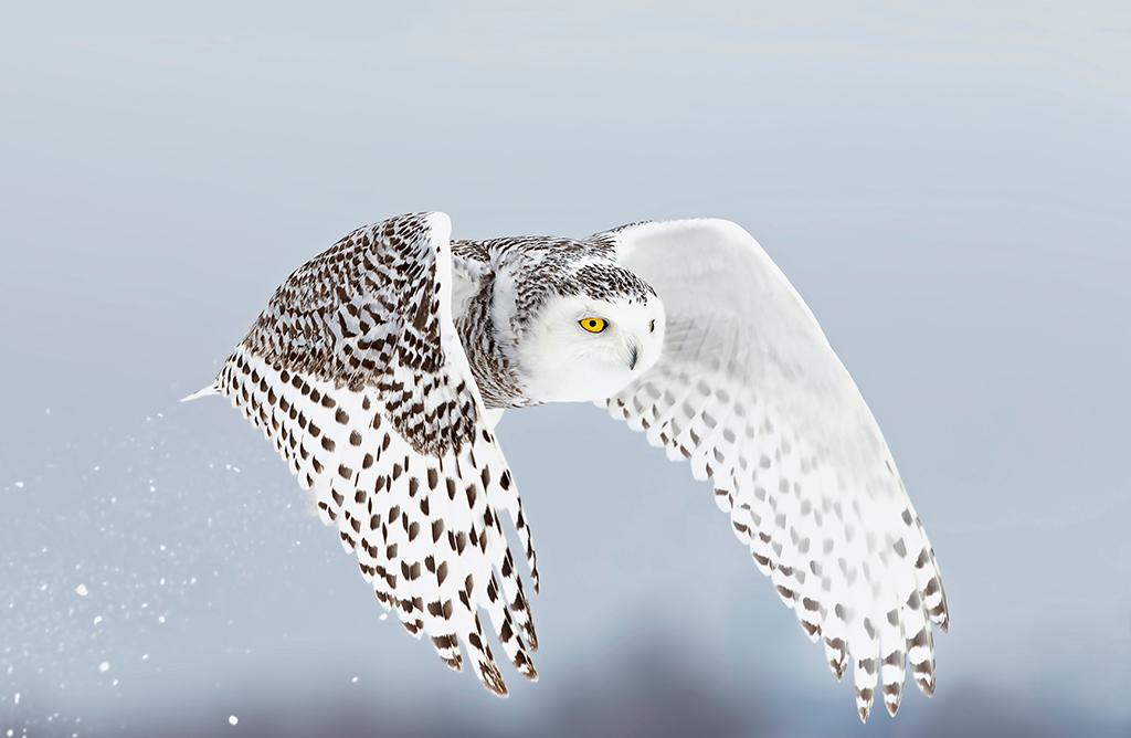 owl4 1024x668