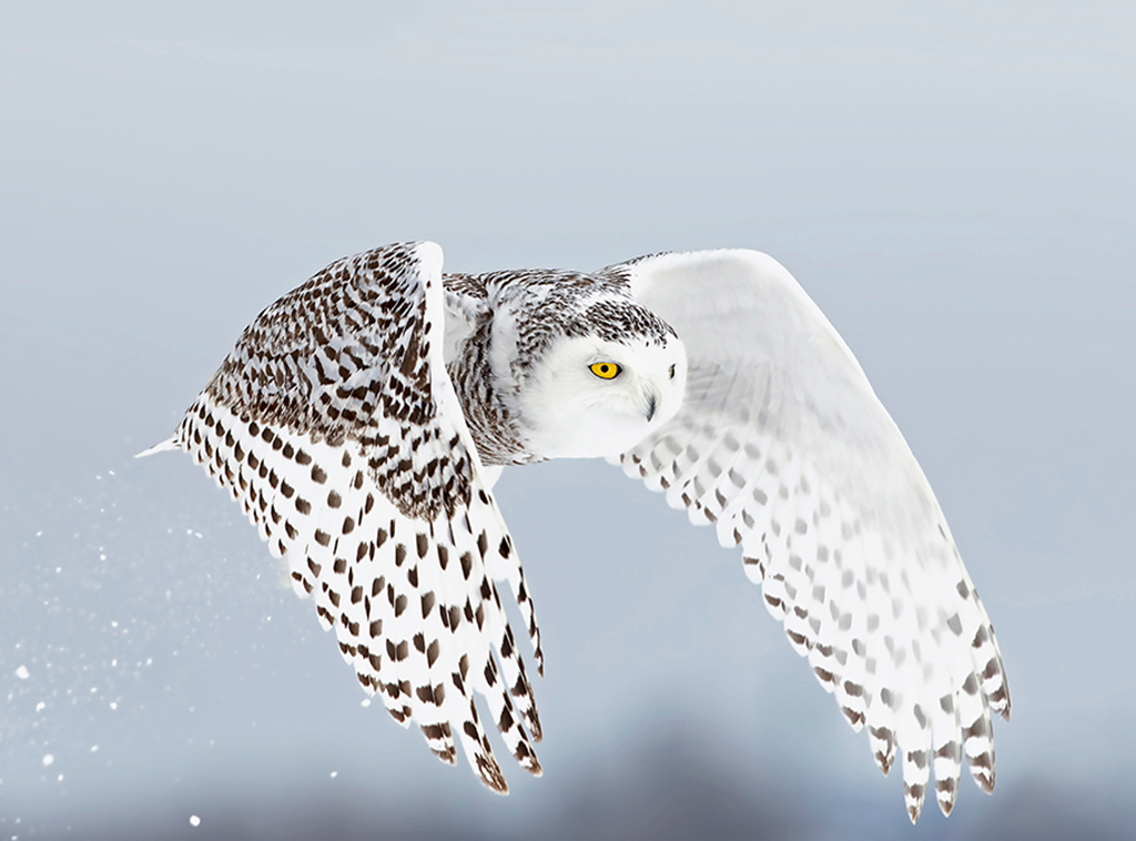 owl4 1024x758 mobile