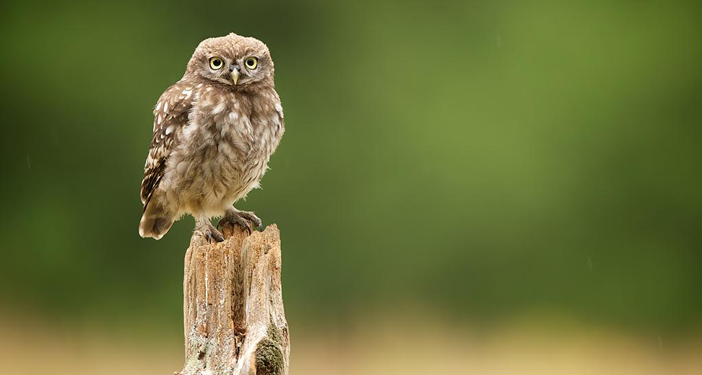 owl5 1024x547