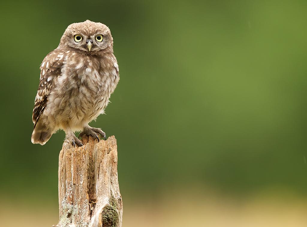 owl5 1024x758 mobile