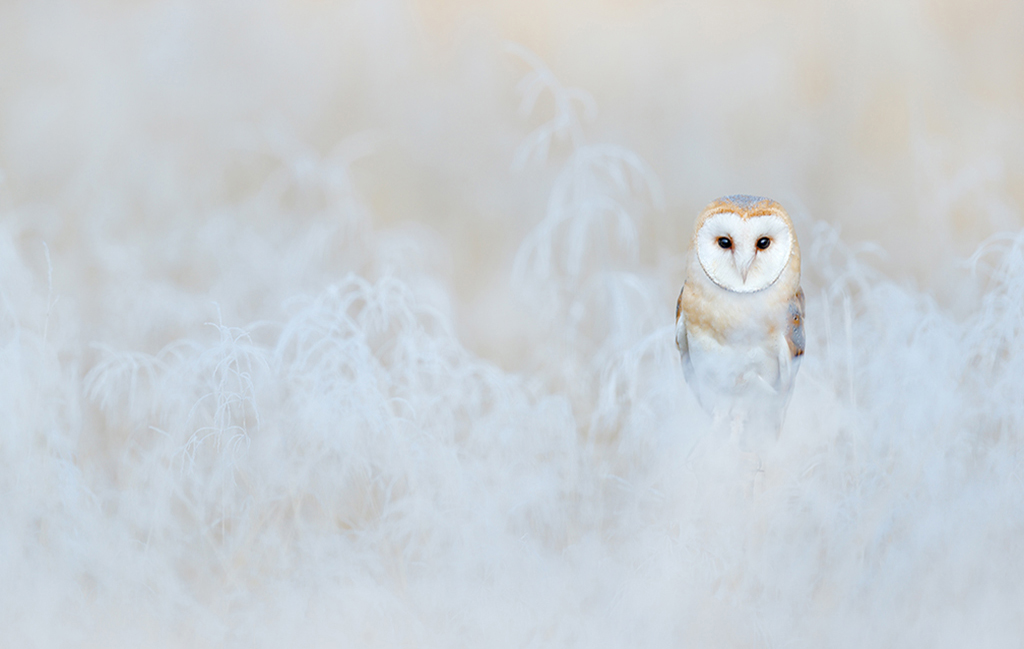 owl6 1024x649
