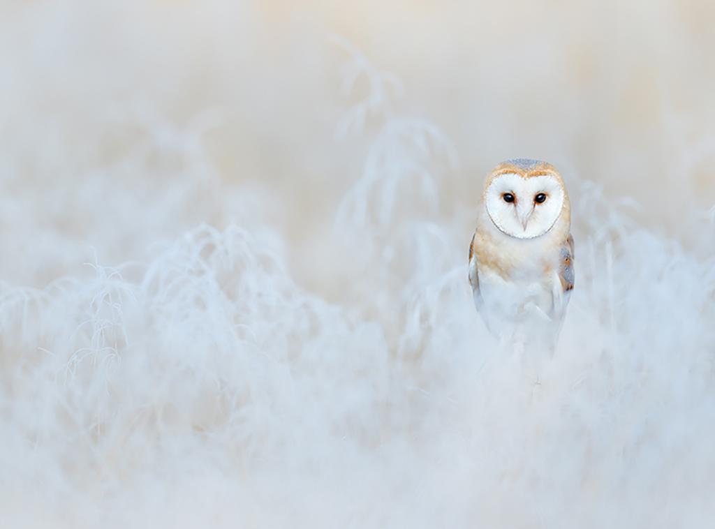 owl6 1024x758 mobile